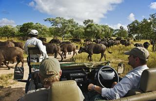 The Safari Experience with Head Guide Juan Pinto