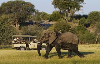 Day and Night Game Drives via open Land Cruisers.  Depending on the water level of the Boteti, boat activities can also be provided.