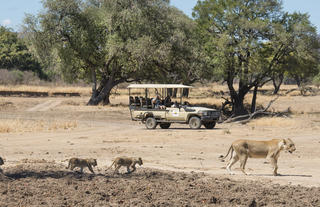 Puku Ridge - game drive - lioness and cubs