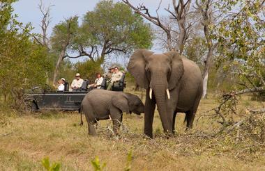 Game drives at Dulini