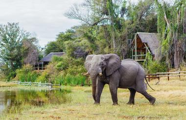 Elephant at Savute Safari Lodge