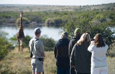 Kwandwe Safari Activities